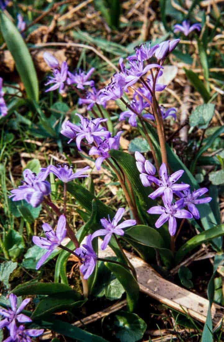 Szilla 1991